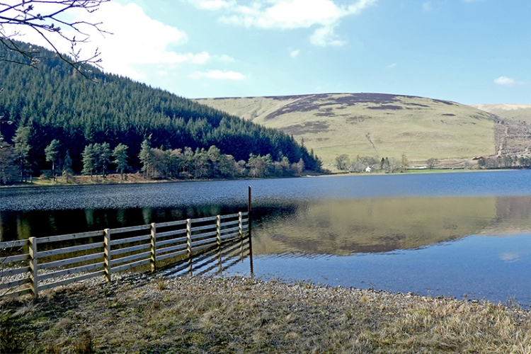 St Mary's Loch reflections (3)