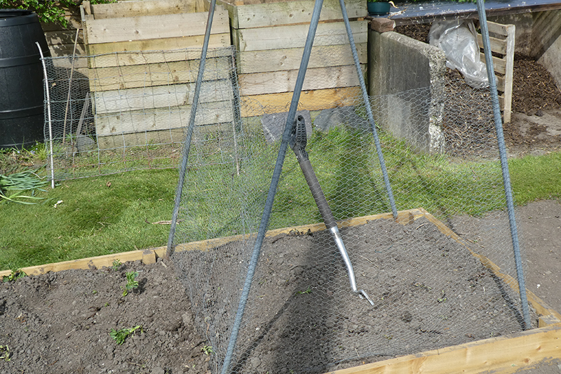 sweet pea cage