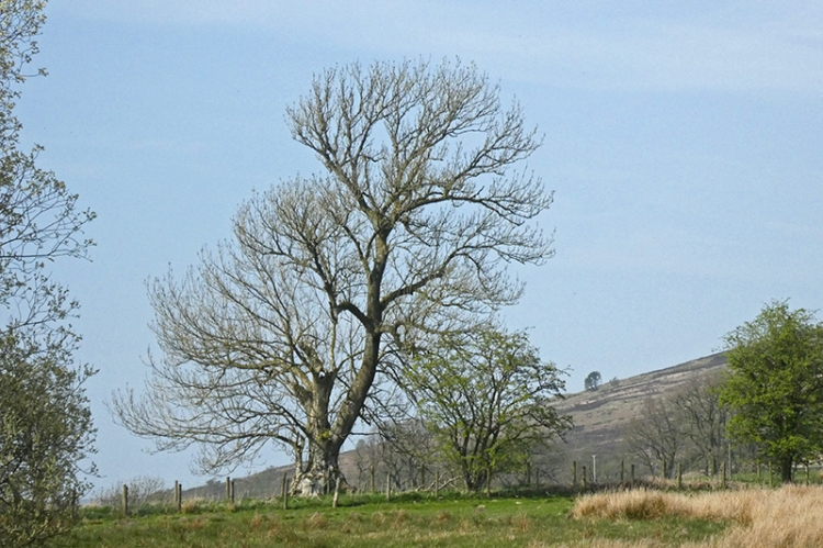 tree broomholmshiels
