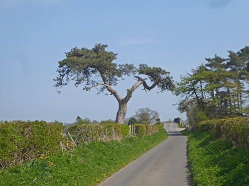 tree near todhills
