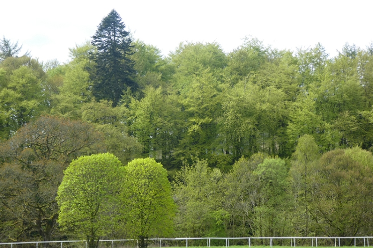 trees green castleholm