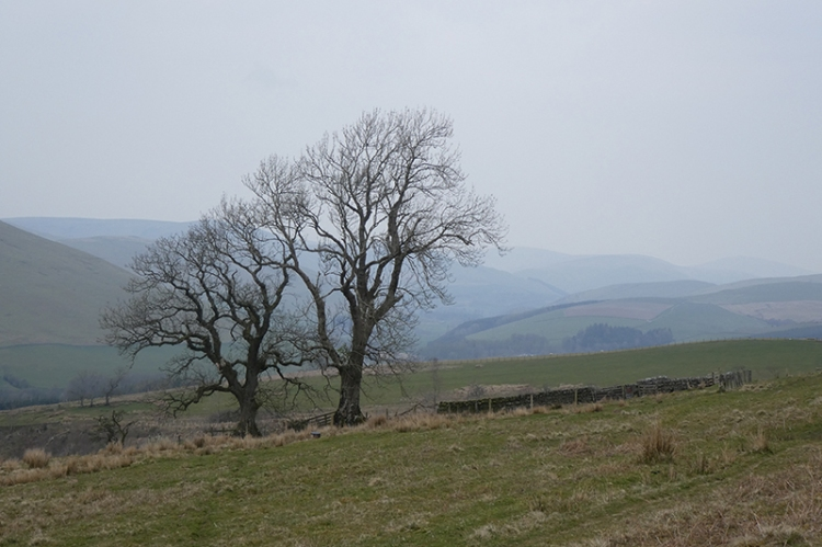 two trees above hillhead