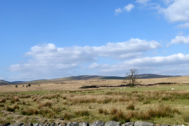 view of windfarm