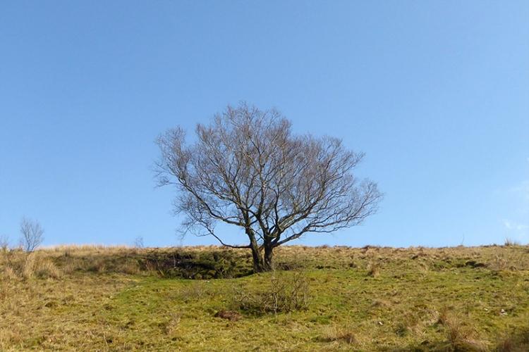 Wauchope valley tree