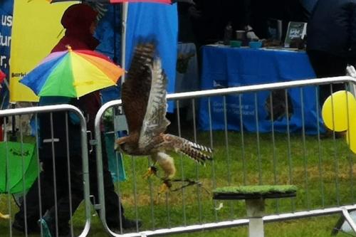 ag show owl