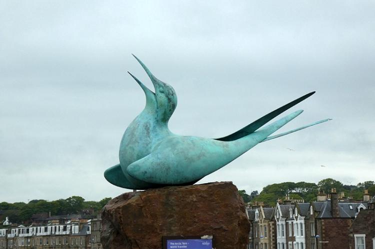 arctic tern scul[ture