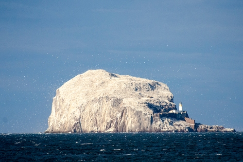Bass Rock gleaming