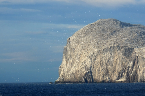 bass rock in the evening
