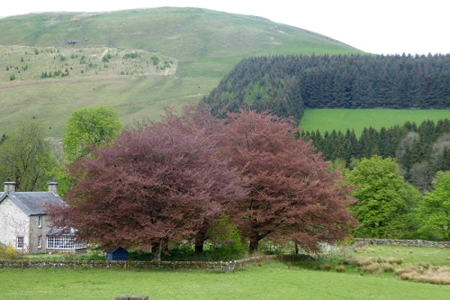 copper beeches beside esk