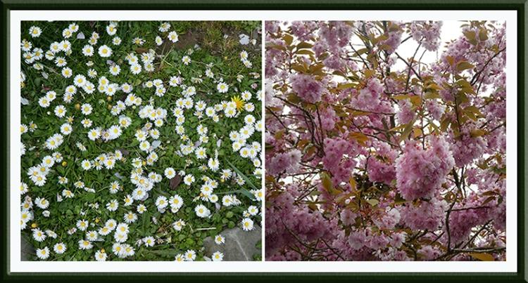 daisies and cherries beside esk
