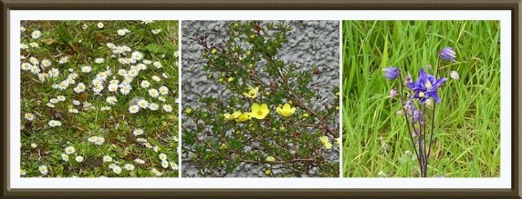 flowers along dam may