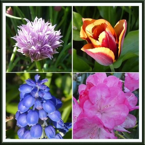 four eveining light flowers