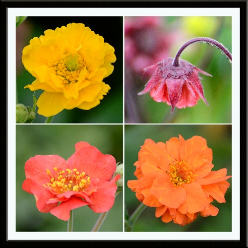 four geums