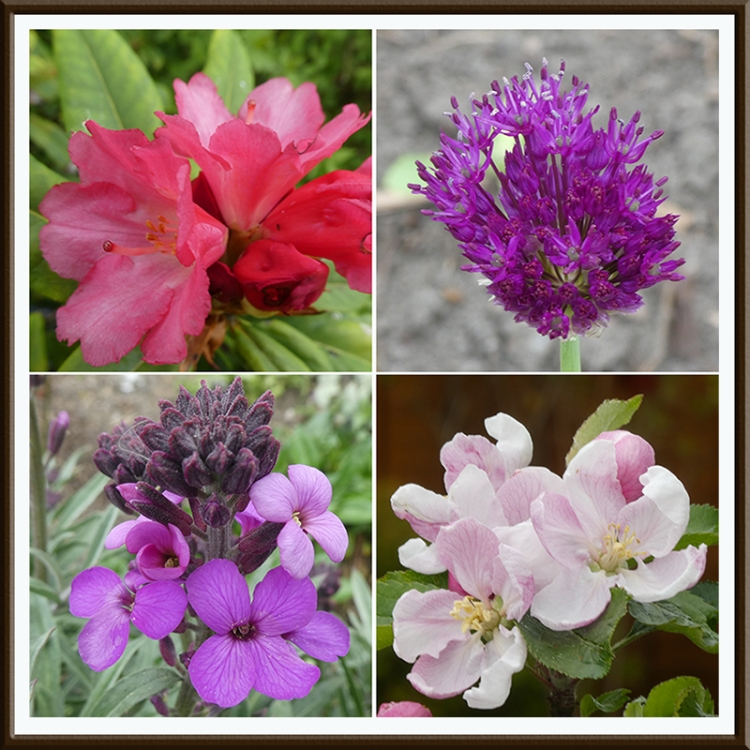 four red-pink flowers