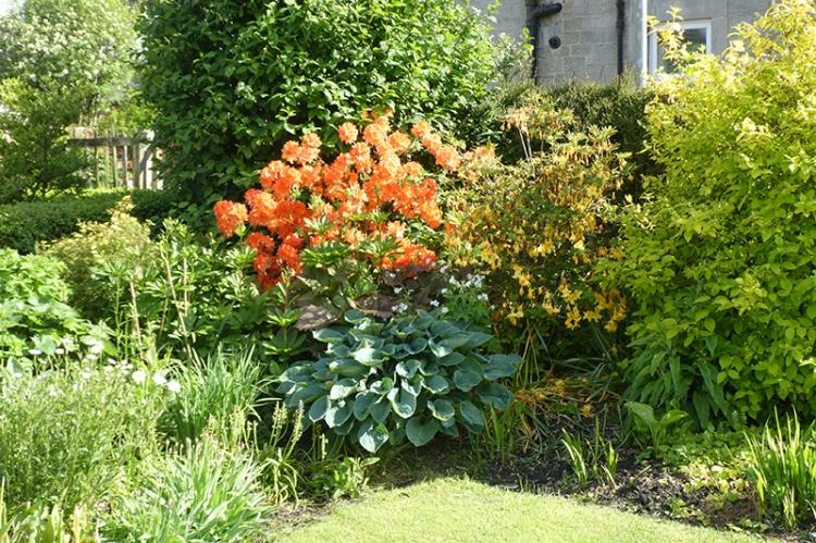 garden bed 7