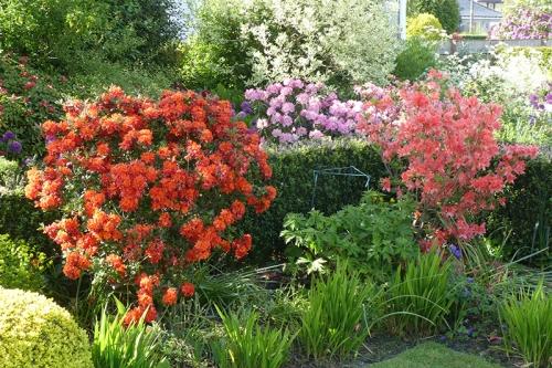 garden bed 9