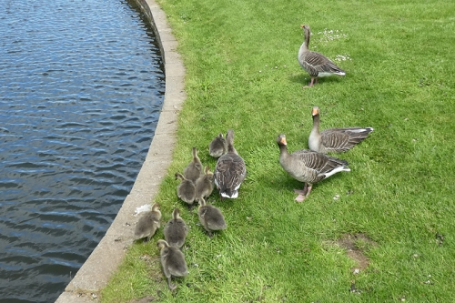goslings Archerfield