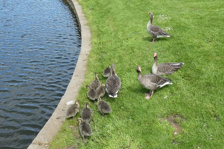 goslings Archerfield