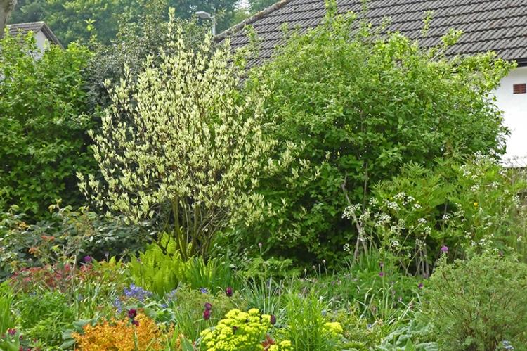 green garden May