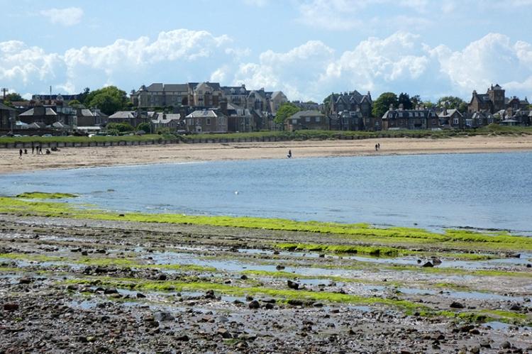 green seaweed NB