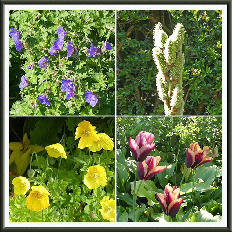 groups of flowers