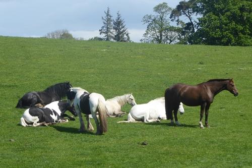 horses NB