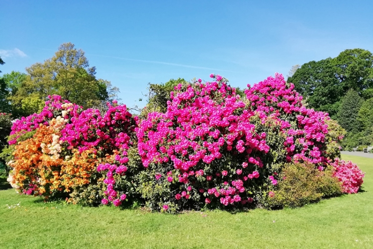 Kenwood colour