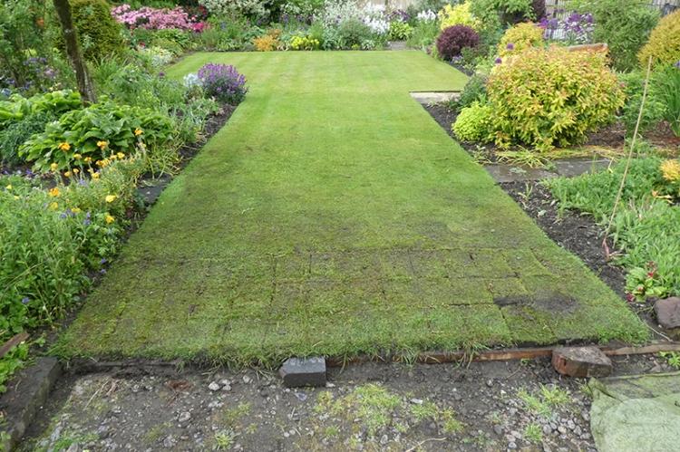 lawn renovation 6