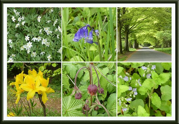 lodge walk wild flowers