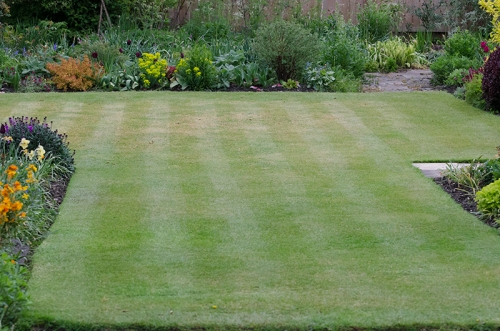 mowed lawn after jackdaws
