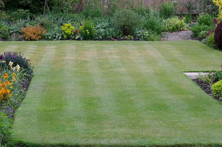mowed lawn after jackdaws