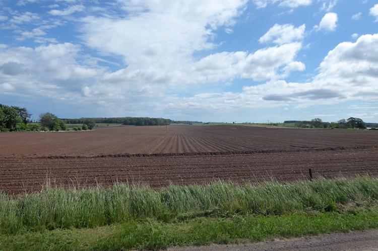 potato field NB