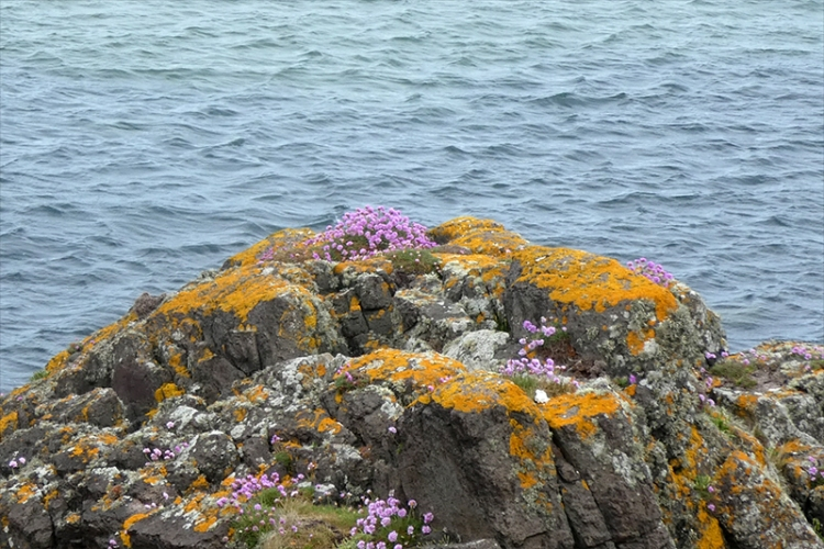 rocky shore with thrift
