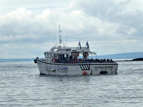 seabird cruise NB