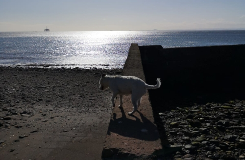shadowy wemyss dog