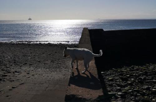 shadowy wemyss dog