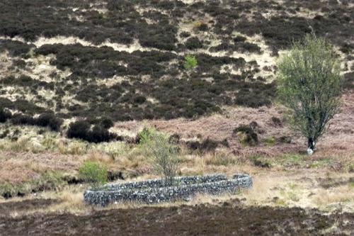 sheep pen on moor