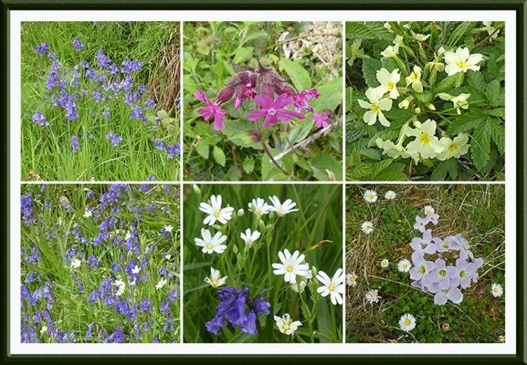 six lodge walk wild flowers