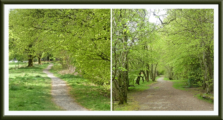two castleholm paths