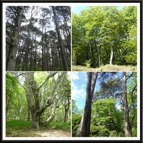 tyninghame woods