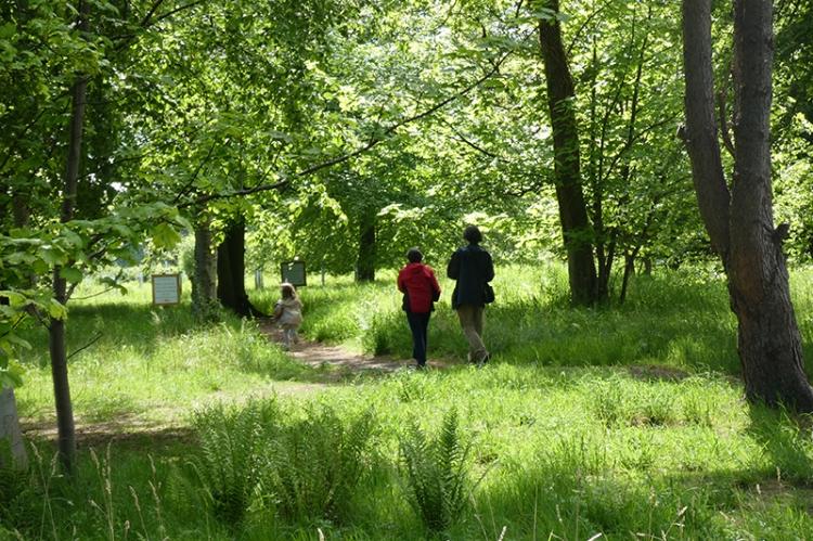 Walking in the wood Archerfield