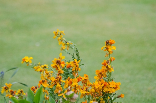 wallflowers through window