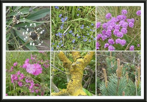 wild flowerrs tyninghame