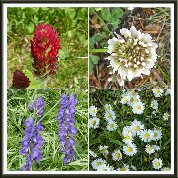 wild flowers Archerfield