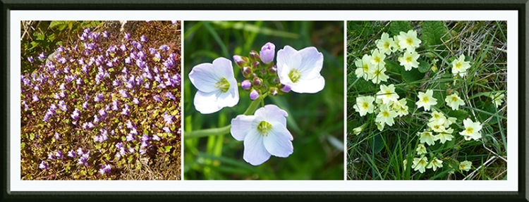 wild flowers up wauchope