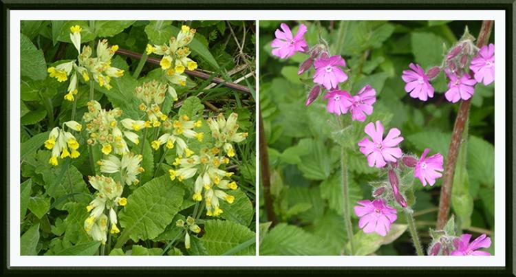 wildflowers benty may
