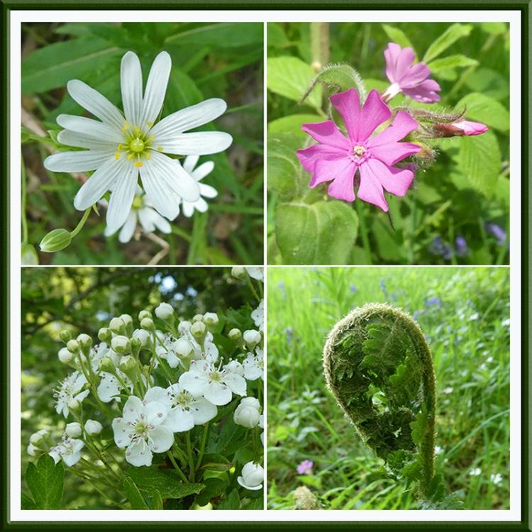 wildflowers eastons walk