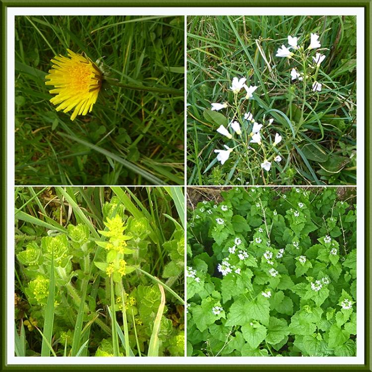 wildflowers near benty