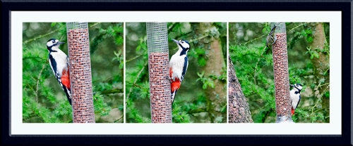 woodpeckers at hide