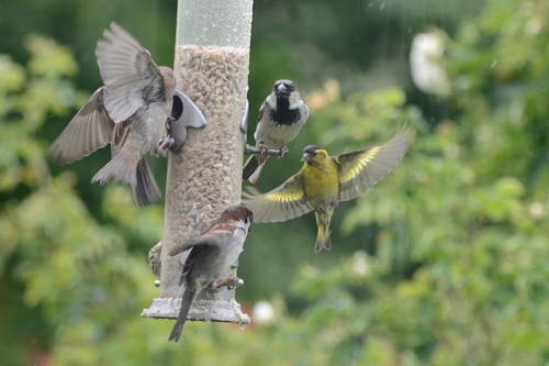 busy feeder june